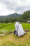 亚裔妇女孤独在绿色露台的米调遣, Mae巴生Luang 库存图片