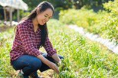 亚裔年轻女人农夫在蒜细香葱庭院里 图库摄影