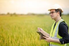 亚裔男性农艺师观察在米领域 库存图片