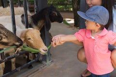 亚裔美丽的母亲是小心您逗人喜爱的婴孩饲料草 库存图片