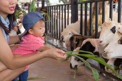 亚裔美丽的母亲是小心您逗人喜爱的婴孩饲料草 库存照片