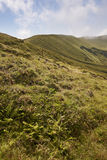 亚速尔群岛风景在Faial海岛 Caldeira重创的火山的锥体 库存图片