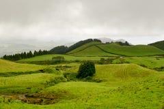 亚速尔群岛-绿色风景 库存图片