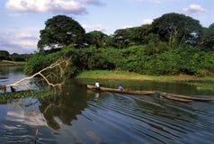 亚马逊巴西海岛marajo 免版税库存照片