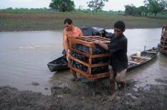 亚马逊巴西海岛marajo 免版税库存图片