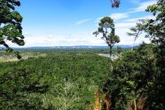 亚马逊森林 免版税库存照片