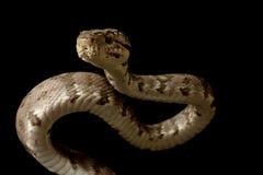 亚马逊蟒蛇结构树 库存照片