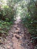 亚马逊足迹 库存照片