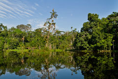 亚马逊雨林的美好的风景 免版税图库摄影