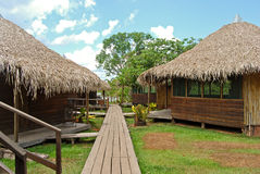 亚马逊雨林:沿亚马孙河的小径在马瑙斯,巴西南美附近 图库摄影