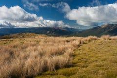 亚高山带牧场地在尼尔森湖国家公园 免版税库存图片
