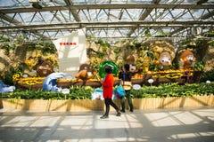 亚洲中国,北京,农业狂欢节,室内展览室,场面,动画片菜 库存图片