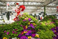 亚洲中国,北京,农业狂欢节,室内展览室,场面,神仙,牡丹 库存照片