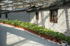 亚洲中国,北京,农业狂欢节,现代建筑学,室内展览室,场面,砖墙,盆 库存图片