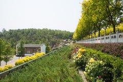 亚洲中国,北京,北部森林公园,庭院风景,绿化区 免版税库存照片