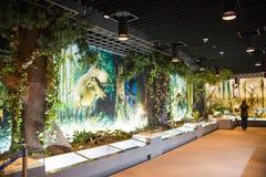 亚洲中国,北京,地质博物馆,室内展览室 库存照片