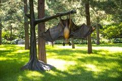 亚洲中国,北京,景山公园,被模仿的昆虫,空中哺乳动物 库存图片