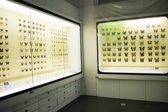亚洲人中国,北京,全国动物Museumï ¼ Œ 图库摄影