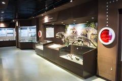 亚洲人中国,北京,古老animalï ¼ ŒIndoor展览室博物馆, 免版税图库摄影