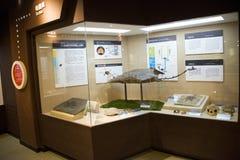 亚洲人中国,北京,古老animalï ¼ ŒIndoor展览室博物馆, 库存图片