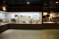 亚洲人中国,北京,古老animalï ¼ ŒIndoor展览室博物馆, 图库摄影