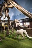 亚洲人中国,北京,古老animalï ¼ ŒIndoor展览室博物馆, 免版税库存照片