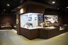 亚洲人中国,北京,古老animalï ¼ ŒIndoor展览室,化石博物馆  免版税库存照片
