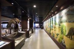 亚洲人中国,北京,古老animalï ¼ ŒIndoor展览室,化石博物馆  免版税库存图片