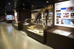 亚洲人中国,北京,古老animalï ¼ ŒIndoor展览室,化石博物馆  图库摄影