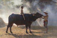 亚洲人地方男孩坐与父亲,乡下泰国的水牛 免版税库存图片