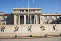 亚洲人自然历史中国,北京,北京博物馆  免版税库存图片
