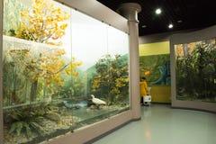 亚洲人自然历史中国,北京,北京博物馆  库存图片