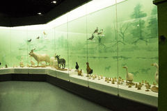 亚洲人自然历史中国,北京,北京博物馆  免版税库存照片