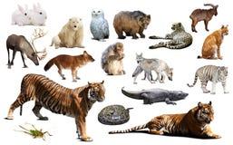 亚洲动物区系 查出在白色 库存照片