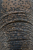 亚洲大象 免版税图库摄影