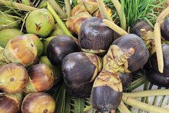 亚洲扇叶树头榈棕榈或棕榈汁 免版税库存照片