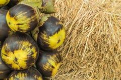 亚洲扇叶树头榈棕榈,棕榈汁,桄榔 免版税图库摄影
