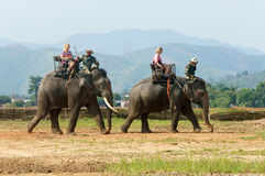 亚洲旅行,暑假, eco游览,大象 免版税库存图片