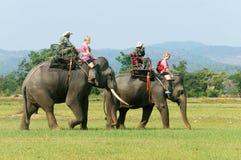 亚洲旅行,暑假, eco游览,大象 免版税库存照片