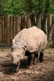 亚洲极大的有角的一头犀牛 免版税库存图片