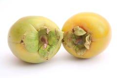 亚洲柿树 免版税库存照片