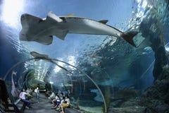 亚洲泰国曼谷水族馆 库存图片