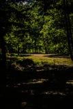 亚洛瓦-土耳其的城市森林 免版税库存照片