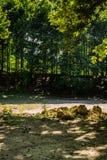 亚洛瓦-土耳其的城市森林 图库摄影