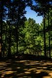 亚洛瓦-土耳其的城市森林 库存照片