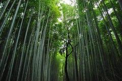 亚洲竹森林 免版税库存图片
