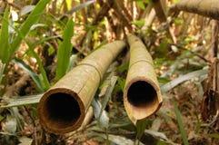 亚洲竹森林 免版税库存照片