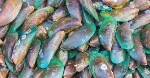 亚洲绿色淡菜 库存图片