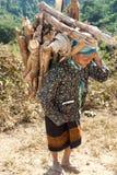 亚洲运载木柴老妇人 库存图片