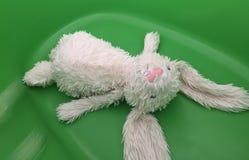 死亡兔子 图库摄影